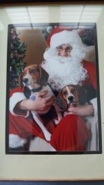 santa dogs